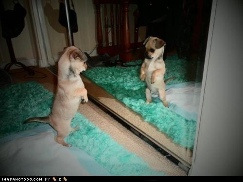 adorable,cute puppy,cyoot puppeh,mirror,puppy,whatbreed,you talking to me
