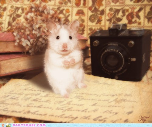 acting like animals camera flash Hall of Fame hamster hard photography scared self portrait surprised timer