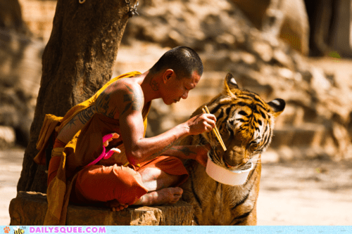 acting like animals,buddhism,buddhist,food,Hall of Fame,lunch,monk,sharing,tiger