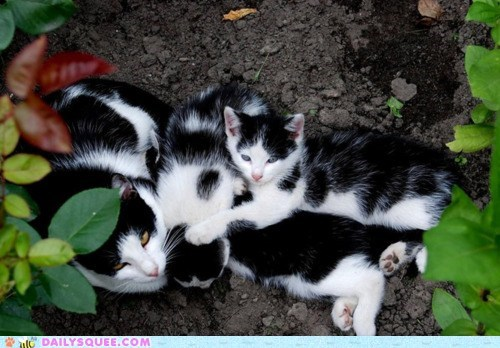 Babies,baby,cat,Cats,cuddle puddle,cuddles,cuddling,kitten,mother,nursing,sleeping