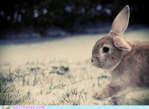 bunny happy bunday peeking rabbit walking - 5818759424