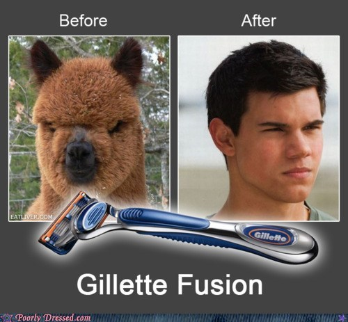 g rated,llama,poorly dressed,shaving,twilight