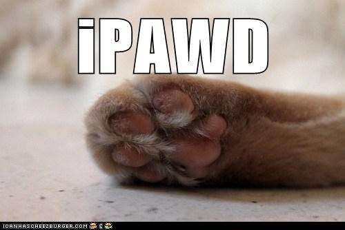 apple caption captioned cat ipod paw prefix pun - 5819037952