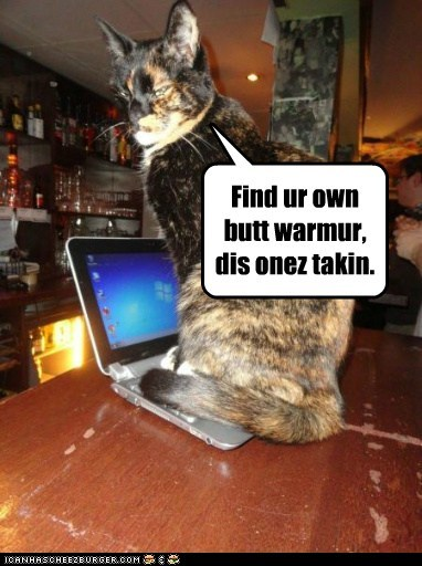 butt cat computer finders keepers hog laptop lolcat warm - 5819339776