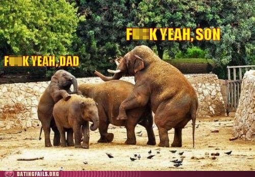 elephants f yeah father-son mating sexy times - 5819439104