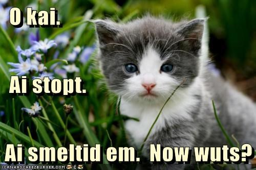 caption,captioned,cat,confused,directions,flowers,following,kitten,now what,smell,stop,waiting