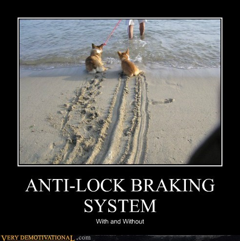anti-lock breaks,corgi,ocean,Pure Awesome