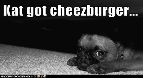 Cheezburger Image 5821213952