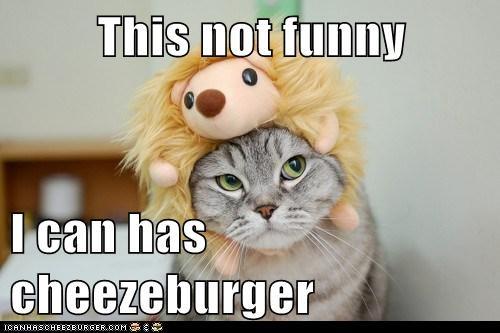 Cheezburger Image 5821265920