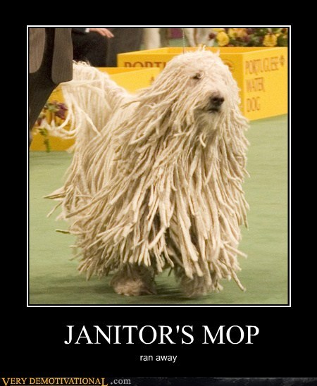dogs hilarious janitor mop wtf - 5821403904