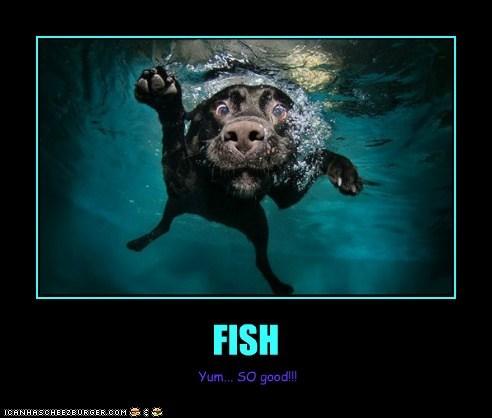 FISH Yum... SO good!!!