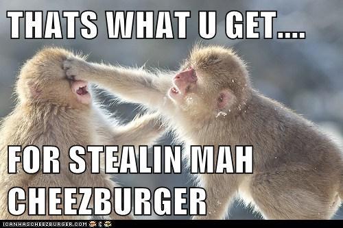 Cheezburger Image 5822073600