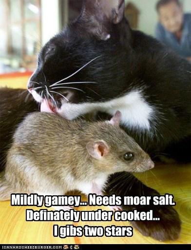 cat food food critic lolcat mouse nom pretentious taste - 5822176512