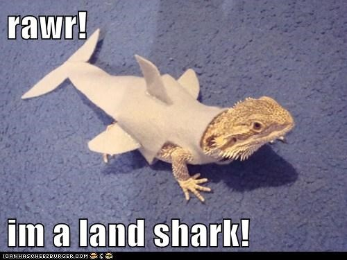 bearded dragons,best of the week,costume,Hall of Fame,lizards,rawr,sharks
