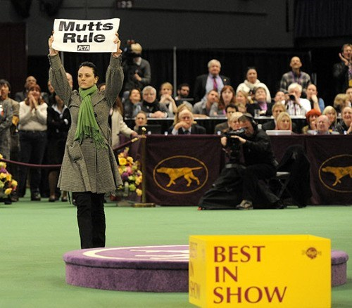 All Kinds Of Wrong dog show Pedigree Westminster Kennel Club - 5822273536