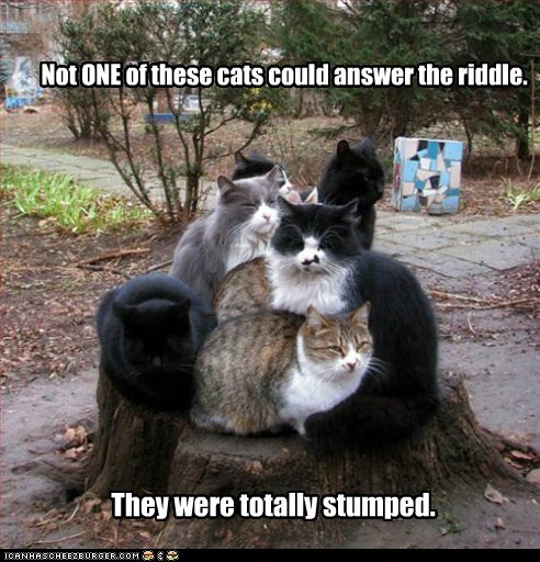 answer,Cats,could,double meaning,not,one,pun,riddle,stump,stumped,totally