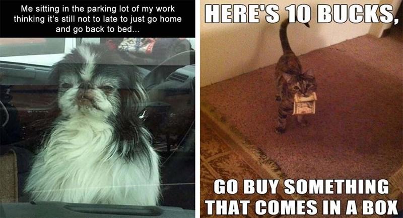 dog memes funny memes Memes animal memes animals - 5823749