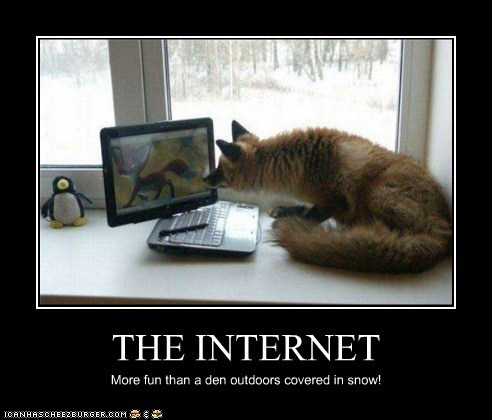 THE INTERNET More fun than a den outdoors covered in snow!