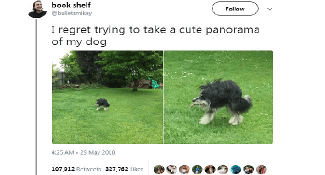 tweets funny tweets animal tweets animals - 5824773