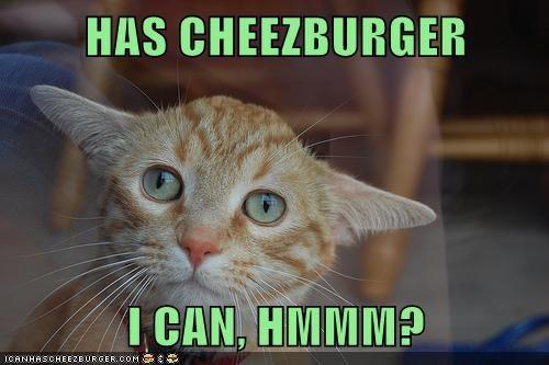 Cheezburger Image 5824935424