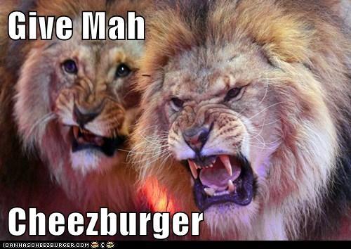 Cheezburger Image 5825170688