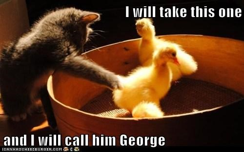 call,caption,captioned,cat,chick,choice,George,kitten,pointing,this