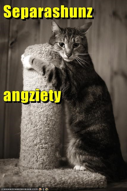 anxiety,caption,captioned,cat,clinging,clingy,do not want,hugging,post,scratching post,separation