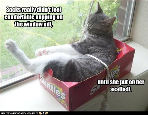 caption captioned cat comfortable didnt feel napping on put safe seatbelt until window windowsill - 5826471936