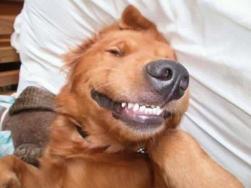 doggeh Sundog - 5827161856