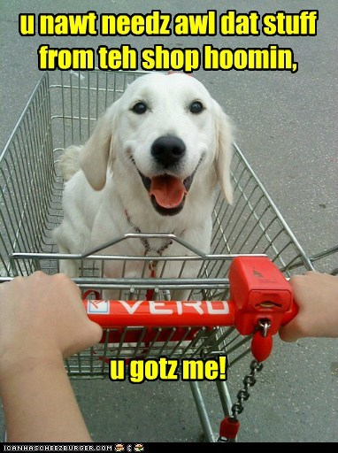happy dog labrador retriever shopping shopping cart tongue tongue out - 5827595520