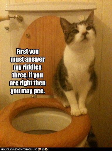 answer bathroom caption captioned cat monty python monty python and the holy grail permission potty rhyme riddles toilet - 5827739904