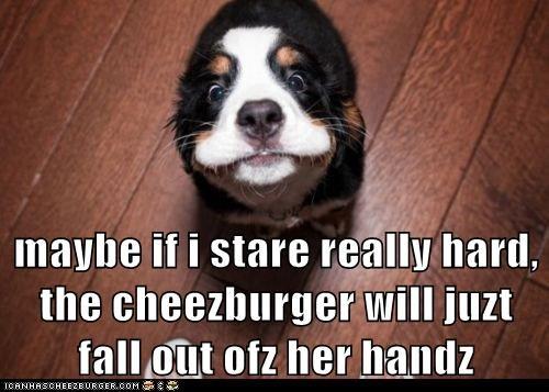 Cheezburger Image 5827775744