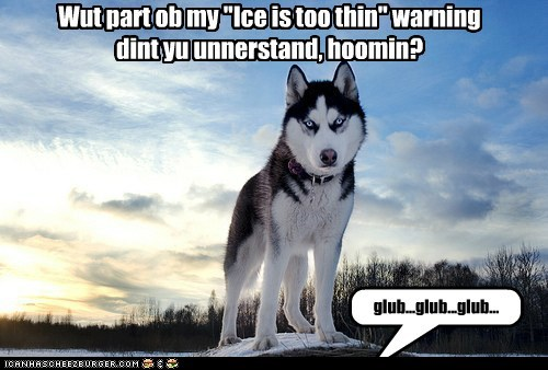 best of the week chilly cold Hall of Fame husky oops snow thin ice warning winter - 5827881216