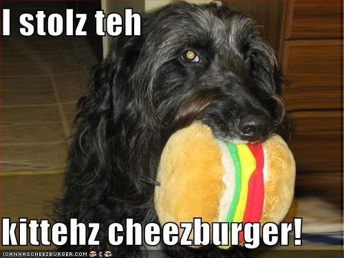 Cheezburger Image 582811904