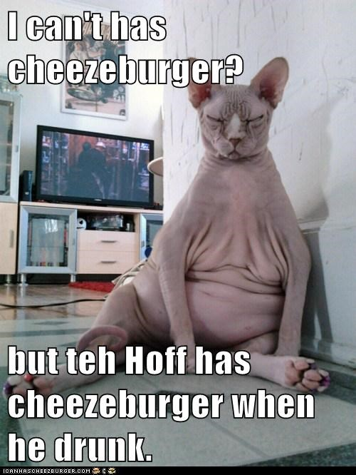 Cheezburger Image 5828380416