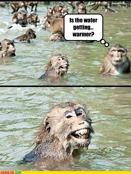 animals hardy har monkeys pee the look - 5828398848