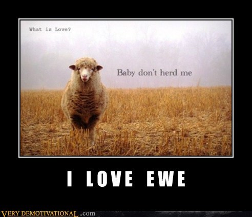 ewe,hilarious,Music,sheep,song,Valentines day