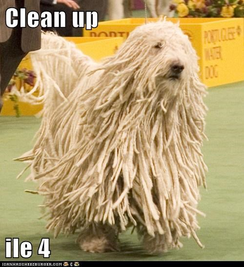 clean clean up komondor mop mop dog