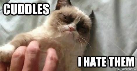 Grumpy Cat funny memes hugs funny cats Cats cat memes - 5828869