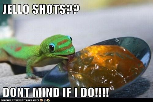 alchohol,best of the week,booze,drinking,drunk,Hall of Fame,jello shot,jello shots,lizard,Party