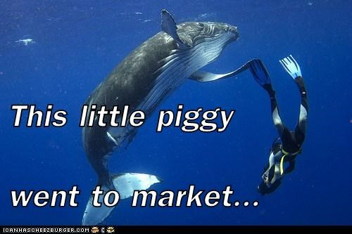 diver,swimmer,this little piggy,whale