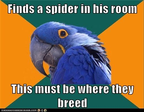 bedroom,birds,breeding grounds,paranoid,Paranoid Parrot,parrots,spiders