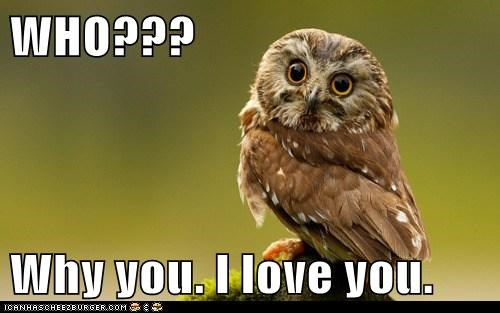 birds,i love you,love,Owl,Valentines day