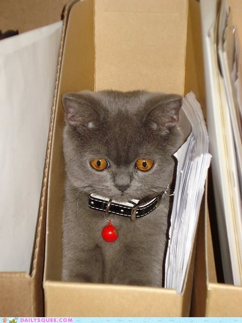 box cat expression face fit fitting reader squees Sad sitting squeezing