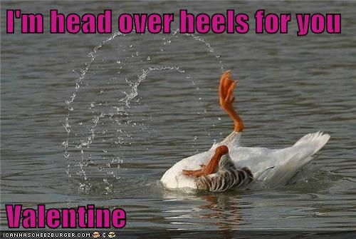 birds duck head over heels love Valentines day - 5830931968