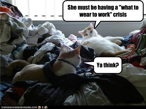 bed,best of the week,caption,captioned,cat,Cats,clothes,crisis,indecisive,options,what to wear