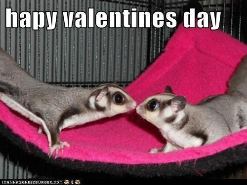 KISS kisses love sugar glider sugar gliders Valentines day