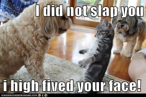 cat,high five,misunderstanding,slap,terrier,whatbreed