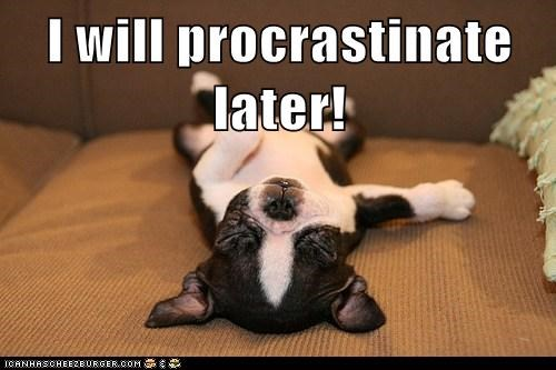 asleep,best of the week,boston terrier,do it later,Hall of Fame,later,lazy,procrastinate,sleeping,tired