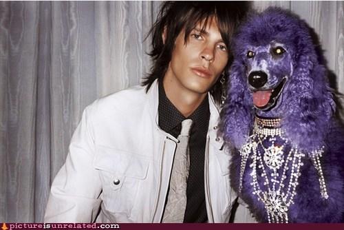 dogs love purple wtf - 5832323840